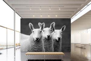 Tres Amigos | Aluminium Print