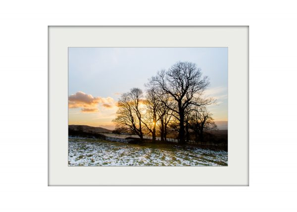 Winter Gold   Mounted Print