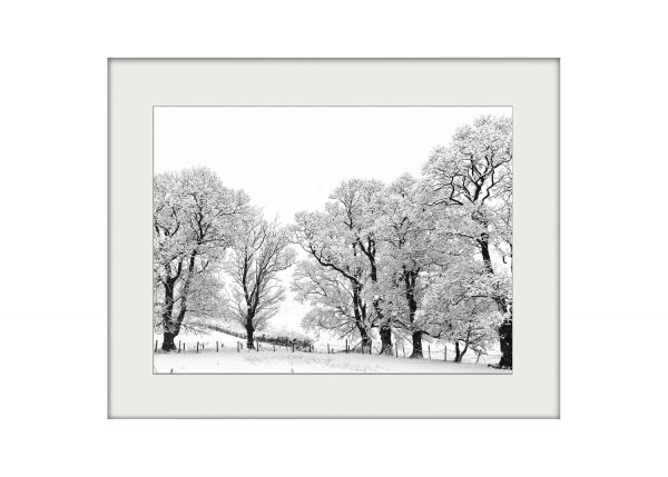 Winter Trees | Mounted Print
