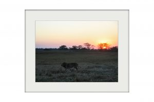 African Nightfall | Mounted Print
