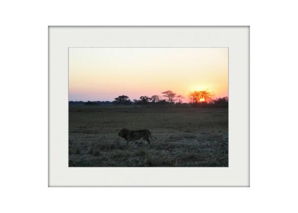 African Nightfall | Mounted Print