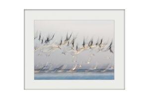 Avian Symphony | Mounted Print