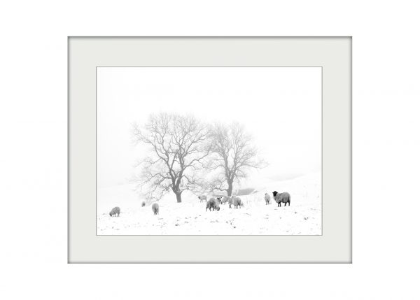 In the Bleak Midwinter | Mounted Print