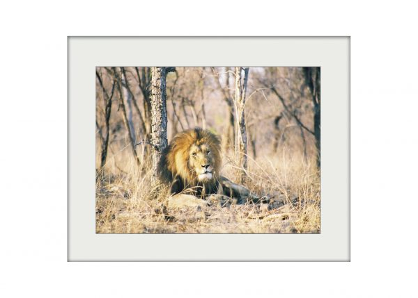 African Reflections   Mounted Print