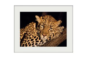 Night Eyes | Mounted Print