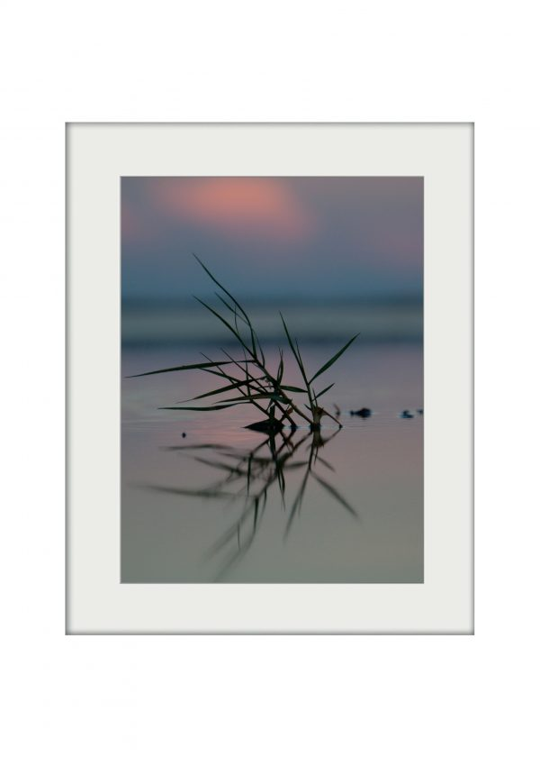 Seagrass Dusk | Mounted Print