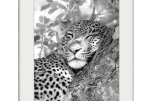 Spotty's Nap | Mounted Print