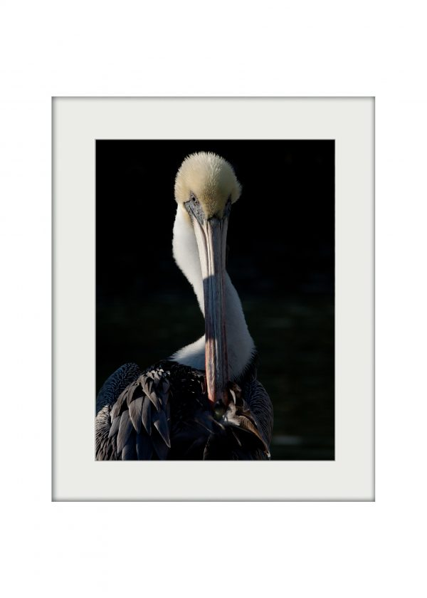 Statuesque | Mounted Print
