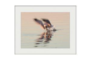Sunset Catch | Mounted Print