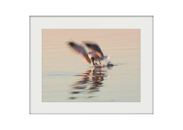 Sunset Catch | Mounted Print
