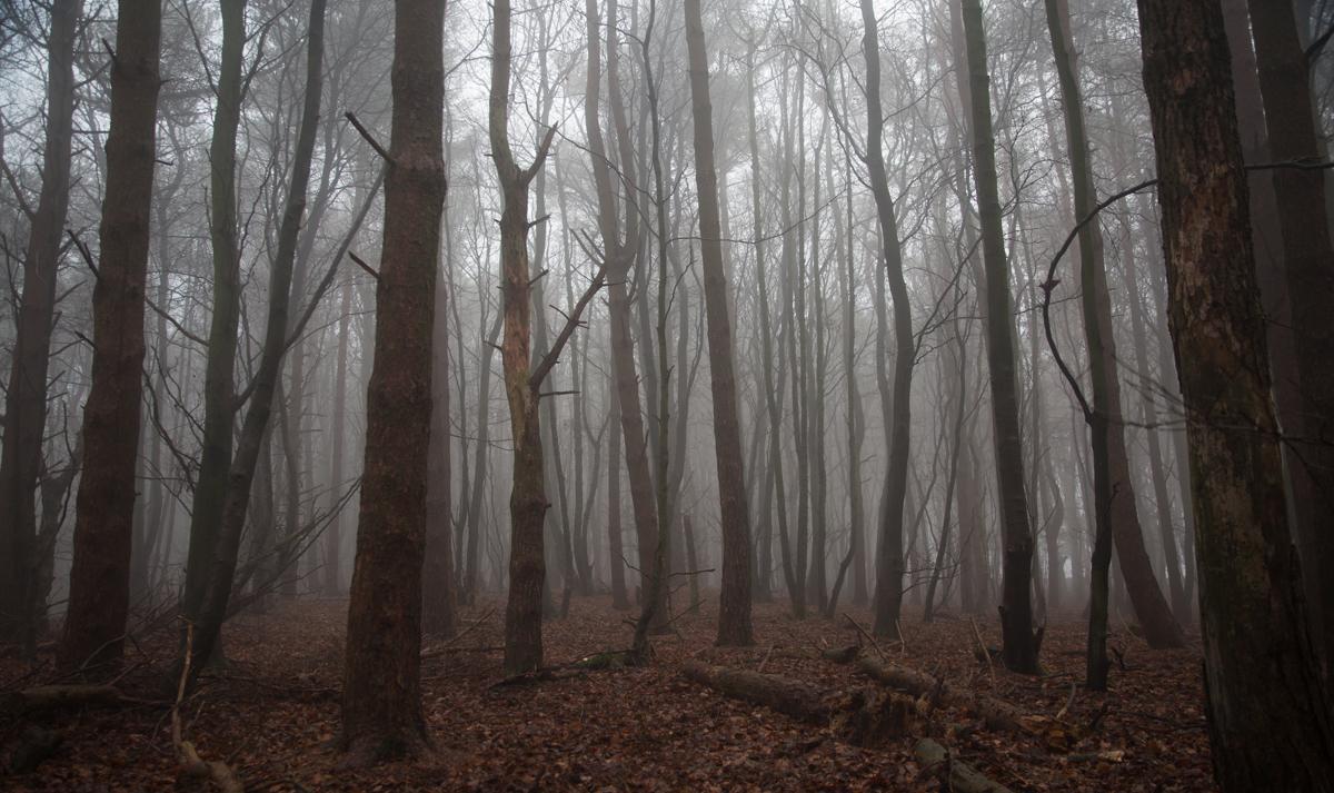 Foggy Forest Panoramic