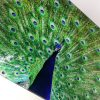 Peacock | Glass Chopping Board Detail