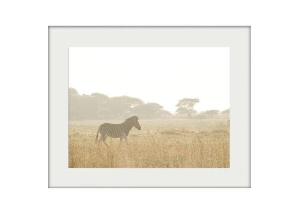Zebra Haze