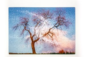 Dancing Tree | Glass Chopping Board