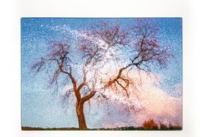 Dancing Tree | Glass Chopping Board
