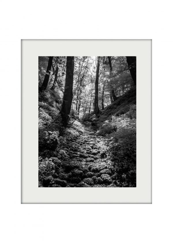 Silver Stream Mounted Print