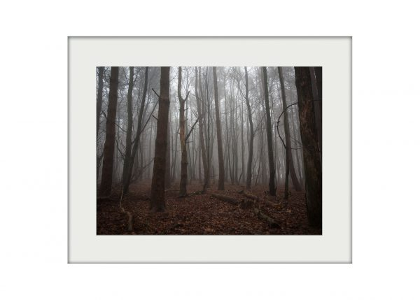 Misty Woods Mounted Print