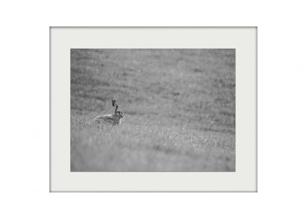 Silver Hare Mounted Print