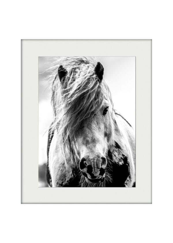 Wild Thing Mounted Print