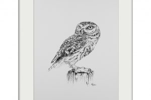Tish Grant Little Owl Mounted