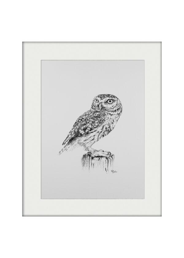 Tish Grant Little Owl Mounted