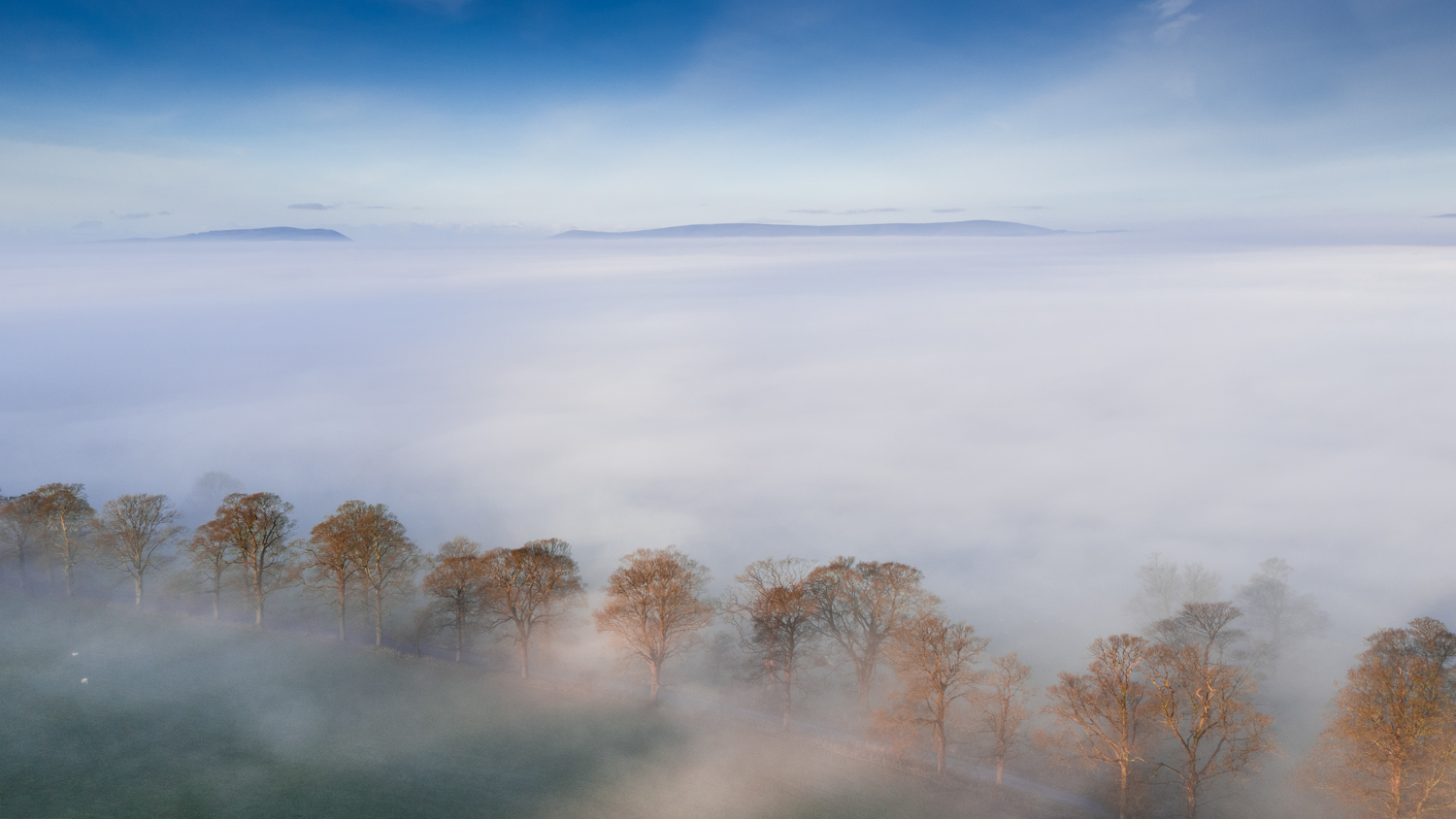 Ribble Valley Mists