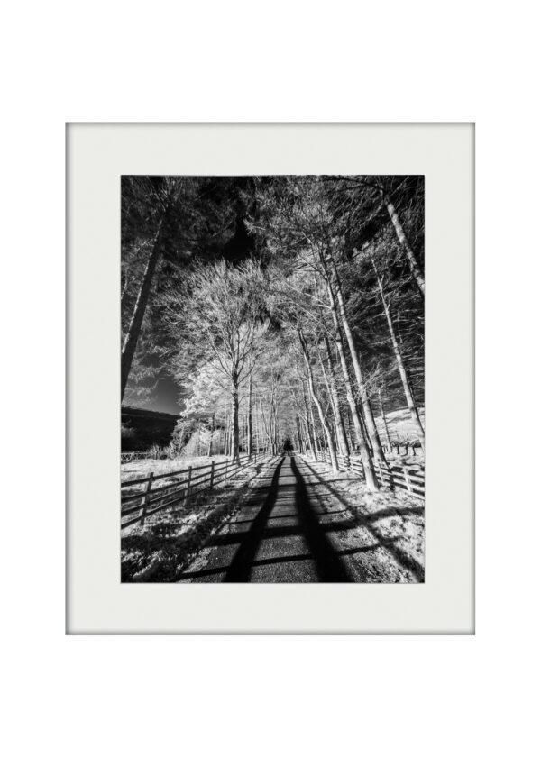 Light Path Mounted Print