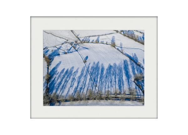 Shadow Trees Mounted Print