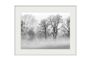 Winter Mists Mounted Print