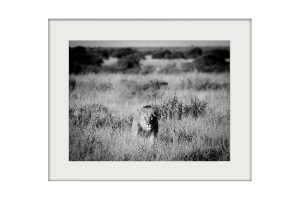 African Morning A3 Mockup