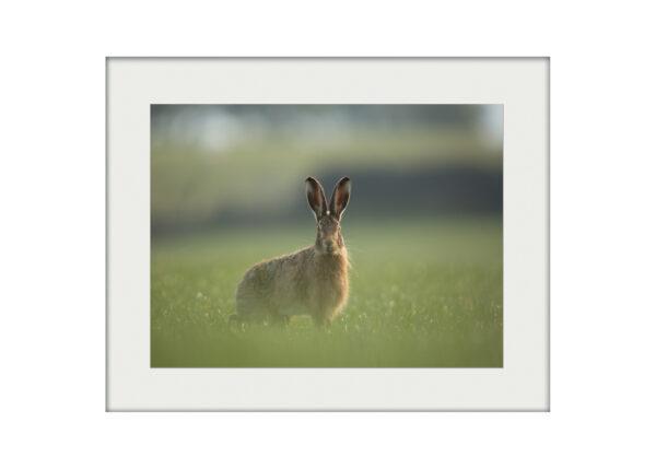 A3 Mockup Hare Encounter