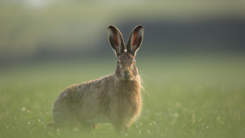 Pendle Hare