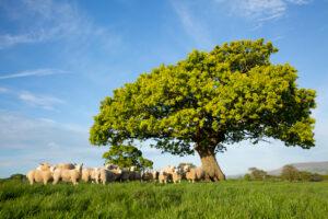 The Texl Tree