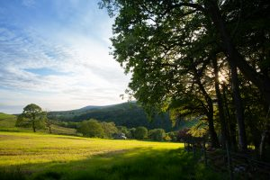 Above Whitewell in May