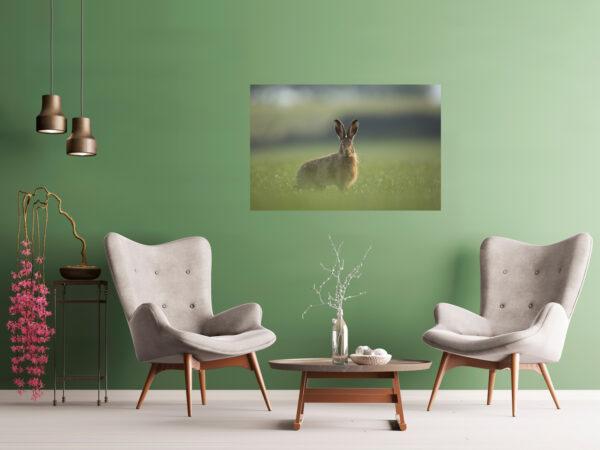 Mockup Pendle Hare