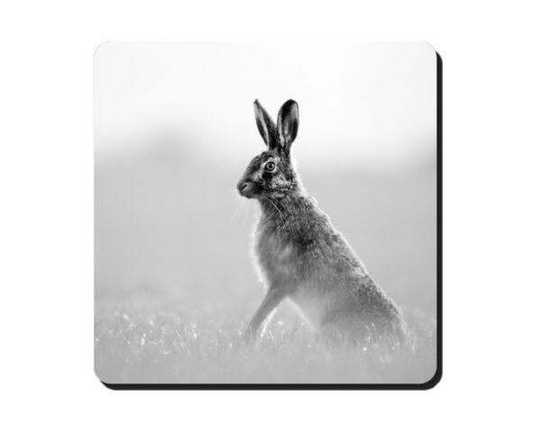 Coaster Hare