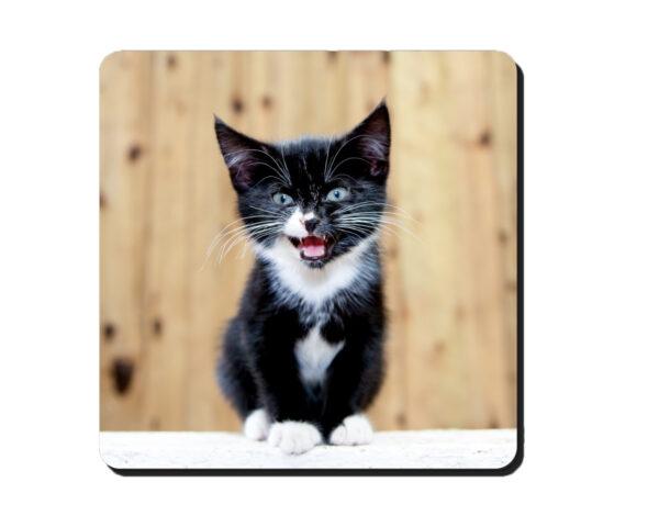 Coaster Kitten