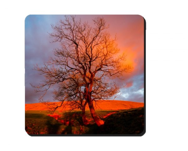 Coaster Red Pendle