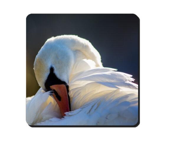 Coaster Swan