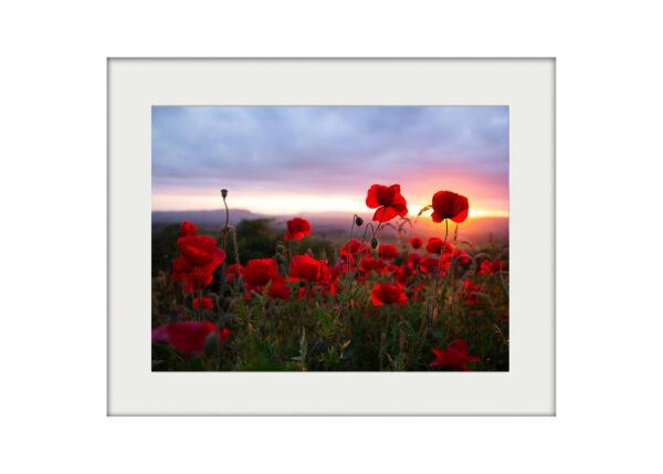 Poppy Field Print Mockup