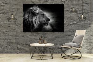 Africa Collection
