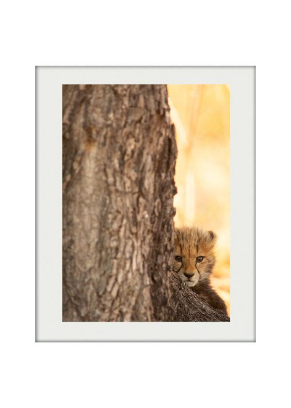 Cheetah Cub A3