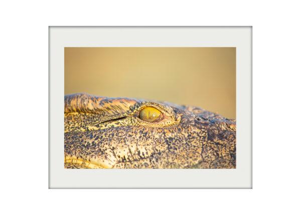Crocodile Eye A3