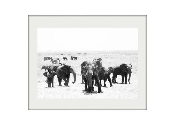 Elephant Crossing A3