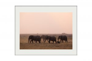 African Mounted Prints