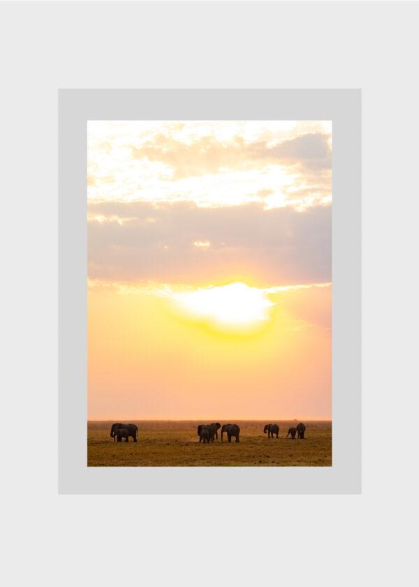 Elephant Skies A3