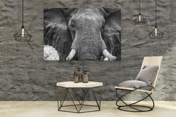 Elephant Texture Mockup
