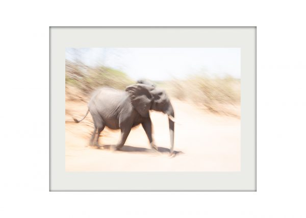 Elephant's Run A3