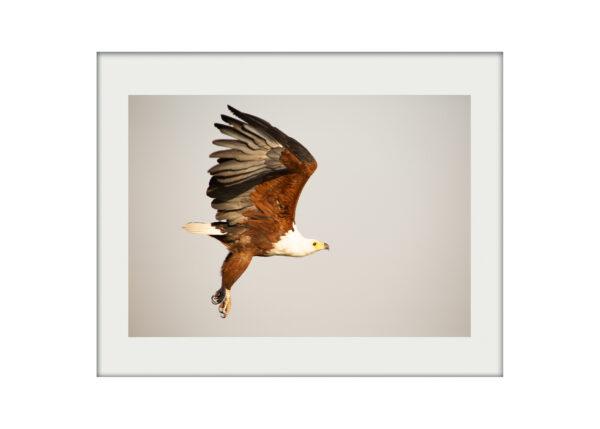 Fish Eagle A3