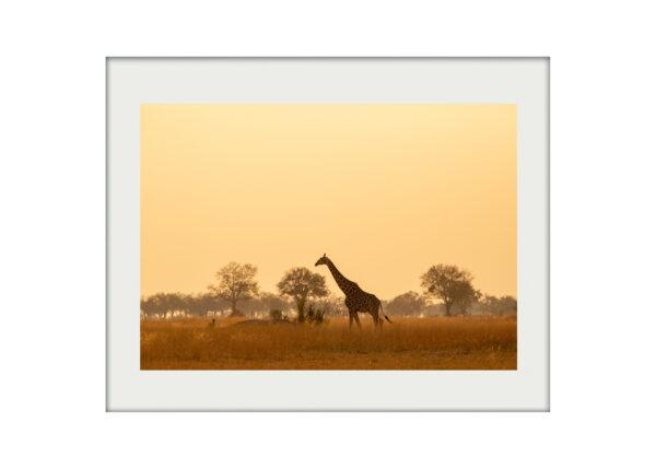 Giraffe Sky A3